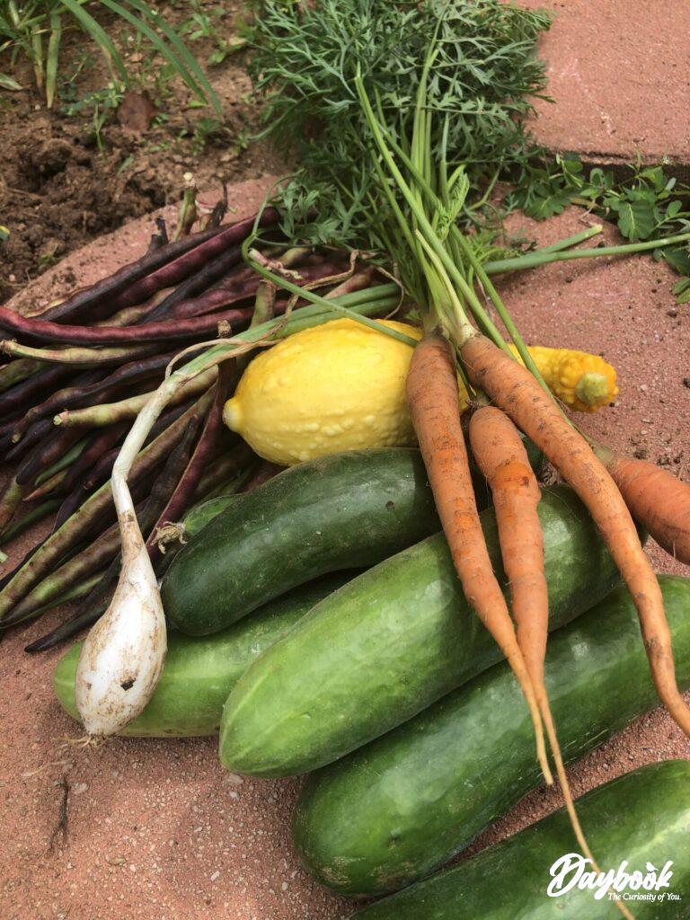 vegetables from a garden