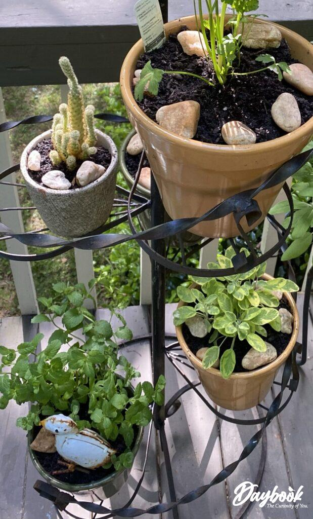plant stand with herbs