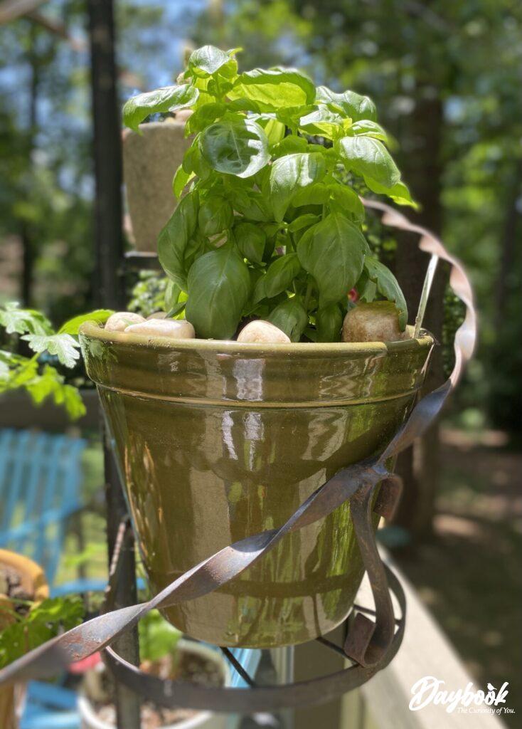 Mint in pot